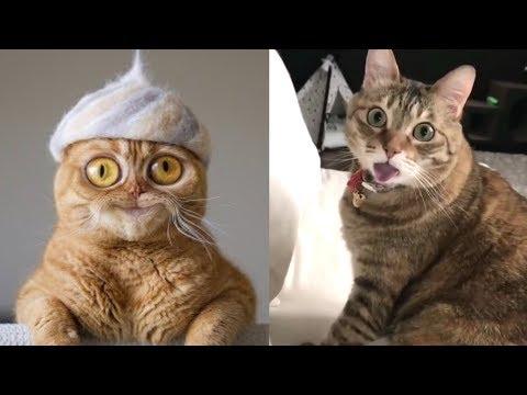 Se und Lustige Tiere! 2019  Lustige Tiere zum Totlachen! vol.17  Funny DuTube
