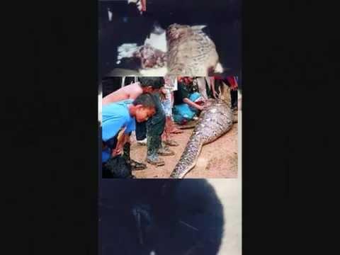 Brasil: Anaconda se