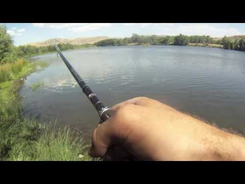 Carp Fishing Truckee River