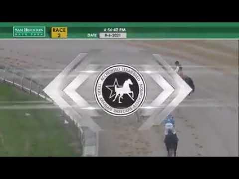 Arabian Racing Recap at Sam Houston's Summer Meet