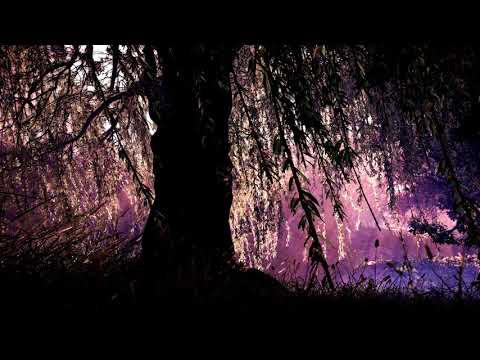 Somber Music | Weeping Willow | Beautiful Piano & Violin Music