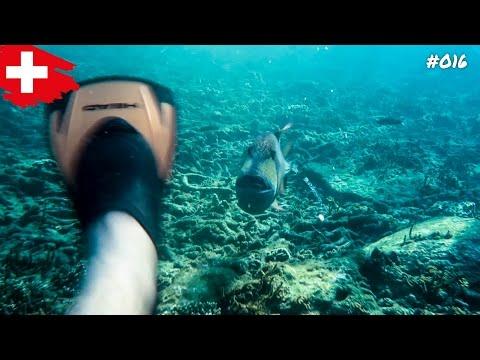 FISCHANGRIFF AM SAI DAENG BEACH 🐠 😱 #016 KOH TAO, THAILAND