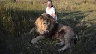 Красивые фото со львом Марселем !