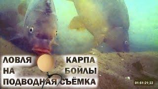 Ловля карпа на бойлы подводная съёмка Видео 4К