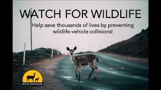 Watch for Wildlife national campaign video; www.WatchForWildlife.org