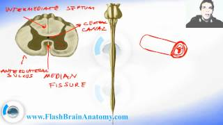 Lessons And 3D Anatomy Software: Spinal Cord Anatomy 2