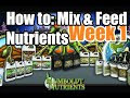 How to Mix Nutrients & Feed Cannabis Plants Week 1 Humboldt (P2PP)