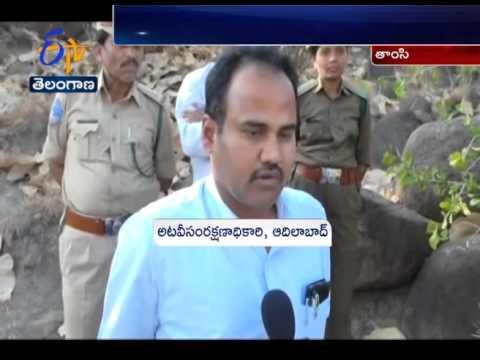 Tiger Found Dead In Tamsi Village at Adilabad