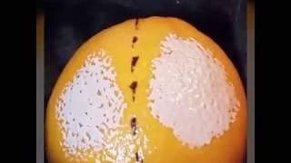 Glorious Primer On An Orange