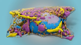 Cell (Anatomical Structure)