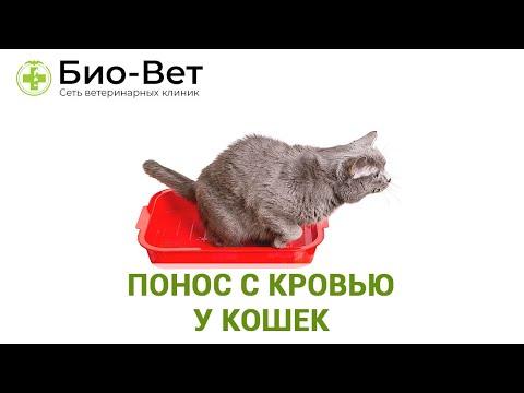 Почему кот ходит в туалет по большому с кровью
