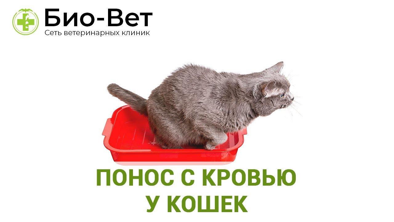 Понос у кота видео