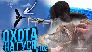 No. 103 Goose-terminator and adrenaline. Opening of the goose hunt. Quadrocopter drone and shotcam.