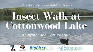 KCCB Session #1 Insect Walk at Cottonwood Lake with Saved By Nature & Bioblitz.club