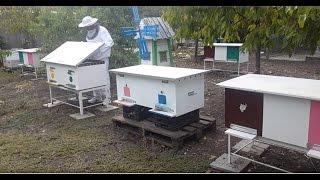 Пчеловодство. ОБЗОР.