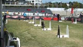 Revan - Flyball Training - 14 April 2012