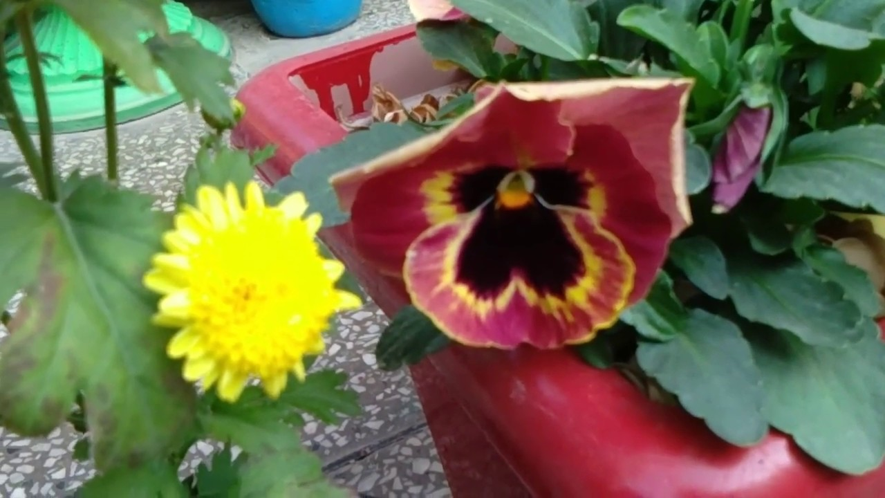 Small Garden And Flowers Design Ideas Amazing Garden Ideas Youtube