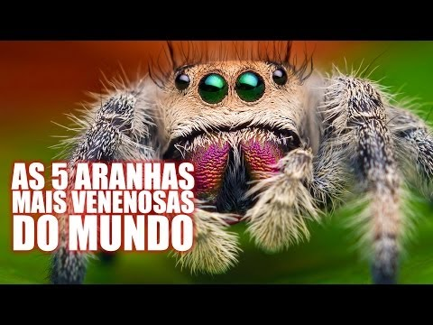 Trailer do filme Teia Engole Aranha