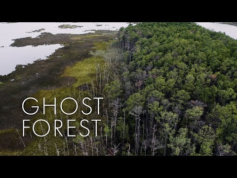Ghost Forests Are Visceral Examples of the Advance of Climate Change