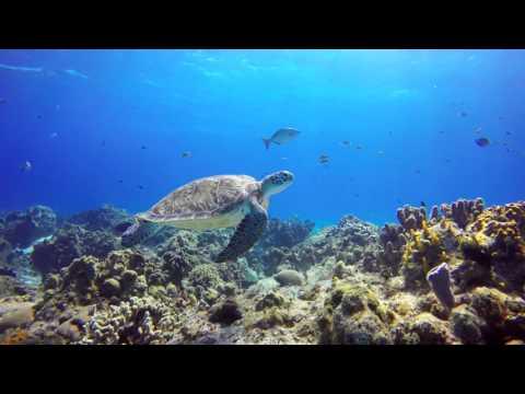 Cozumel Scuba Diving In UHD 4k.
