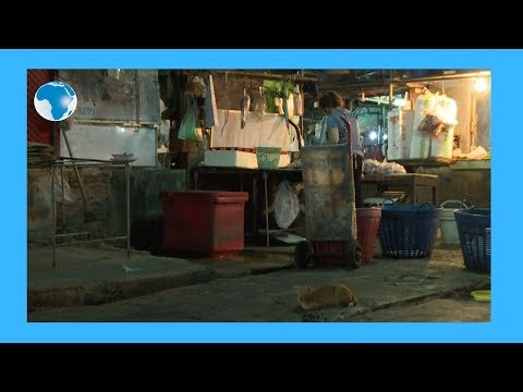 Coronavirus: rats take over emptied Bangkok streets