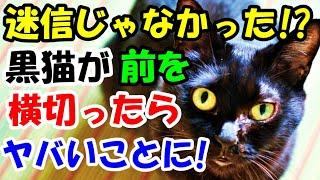 迷信じゃなかった!?黒猫が前を横切ったらヤバいことに!【猫の不思議な話】【朗読】