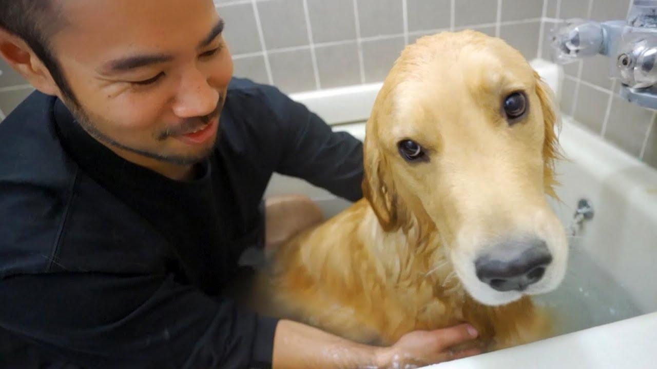 冬は湯舟で愛犬とお風呂に限る