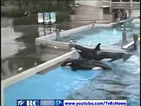baleia mata treinadora video completo