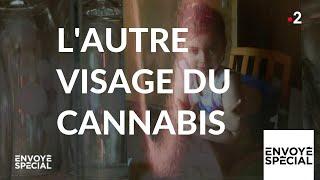 Envoyé spécial. L'autre visage du cannabis - 28 février 2019 (France 2)