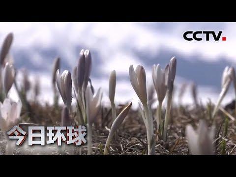 [今日环球] 新疆:天山脚