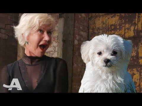 Puppies Meet Helen Mirren | AARP