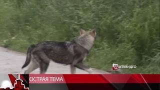 В этом году в Магадане почти на 900 тысяч рублей отловлено 122 собаки, из них стерилизовали 43