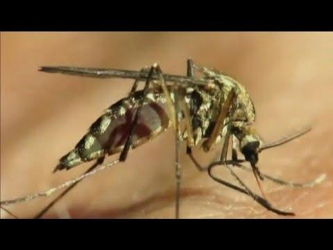 West-Nil-Virus: Erstmals  Infektion Durch Stechmücke In Deutschland Nachgewiesen