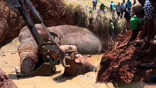 An Elephant Entrapped in well with mud