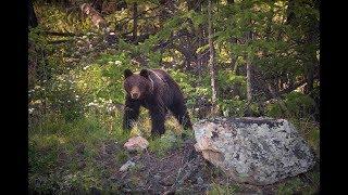 Байкал. Берег бурых медведей.