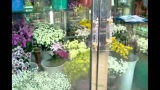금산꽃배달 변환동 0001