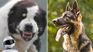 BEST DOGS FOR SECURITY / 10 BREEDS OF GUARDS