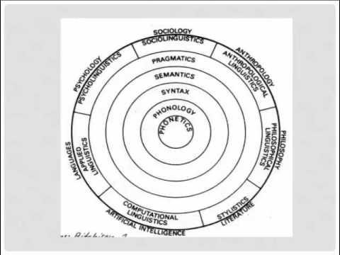 Branches of linguistics