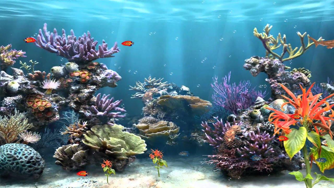 acquario virtuale gratis