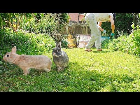 rabbitscams