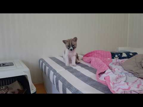 how-will-my-dog-react,-when-i-turn-off-a/c-in-the-heat?