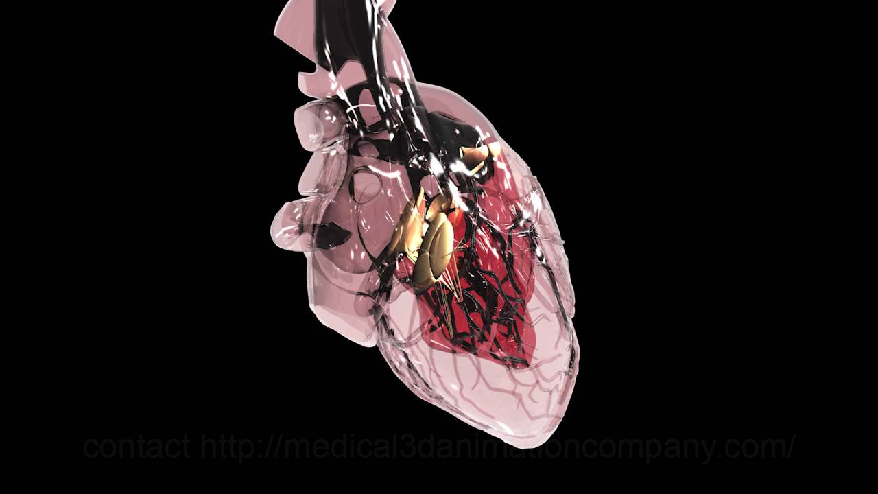 heart anatomy blood flow valves 3d medical animation company studio ...