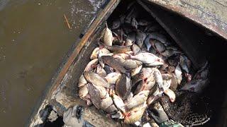 Выставили сети секрета в море около 300кг рыбы