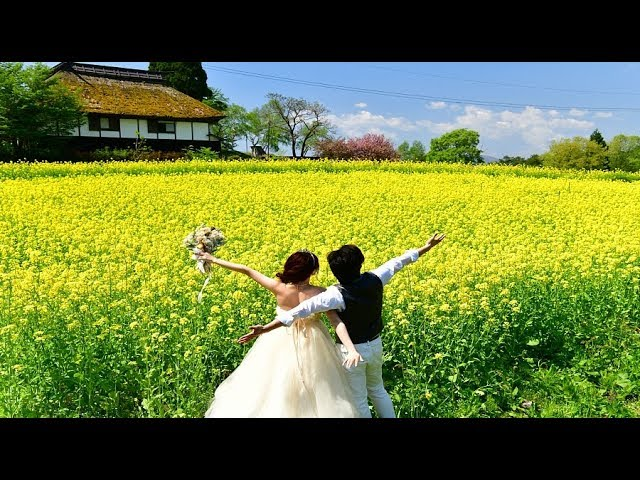 新緑と菜の花が輝く春の北竜湖・4K