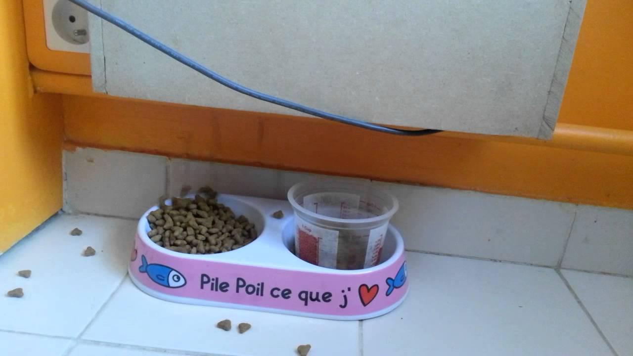 Arduino Cat Food Dispenser