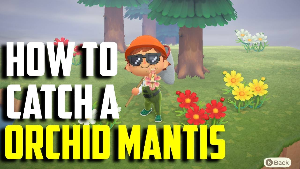 How To Catch An Orchid Mantis Orchid Mantis Acnh Animal Crossing New Horizons Orchid Mantis Youtube