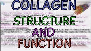 Collagen - Structure and Function