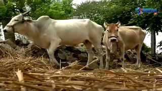 Success story of Organic Rice farming by Kodali Someswara Rao - ExpressTV