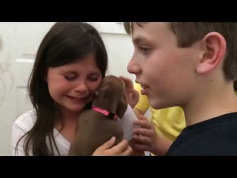 Cute puppy surprise!