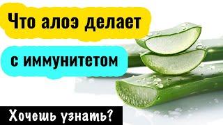 постер к видео Алоэ вера. Рецепты применения. Как укрепить иммунитет